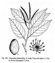 Parazitaellenes gyógynövények listája